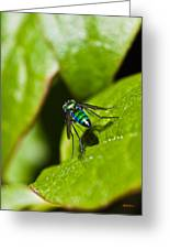 Small Green Fly Greeting Card