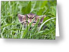 Small Kitten In The Grass Greeting Card
