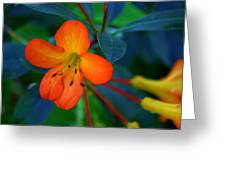 Small Orange Flower Greeting Card