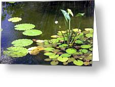Small Pond Greeting Card