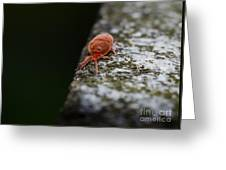 Small Red Insect Greeting Card