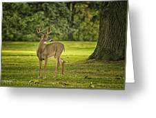 Small Stag Greeting Card