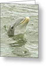Smiling Dolphin Greeting Card