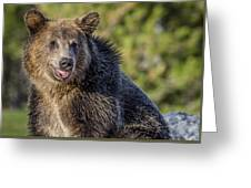 Smiling Grizzly Greeting Card