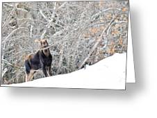 Smiling Moose Greeting Card