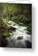 Smokey Mountain Stream No.312 Greeting Card