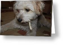 Smoking Lhasa Apso Bingo 2 Greeting Card by Zoh Beny