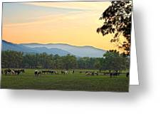 Smoky Mountain Horse Herd Greeting Card