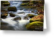 Smoky Mtn Stream Greeting Card