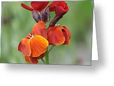 Smooth And Silky Greeting Card