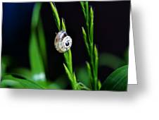 Snail On Green Grass Greeting Card