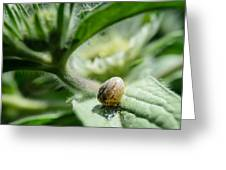 Snail On The Leaf Greeting Card