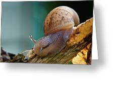 Snail Traversing Greeting Card