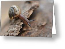 Snail's Tale Greeting Card