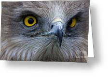 Snake Eagle 2 Greeting Card