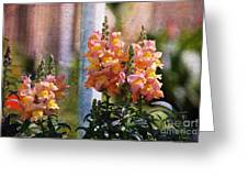 Snapdragons Greeting Card