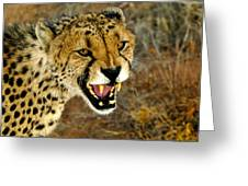 Snarl Greeting Card