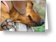 Sniffing Out Dreams Greeting Card