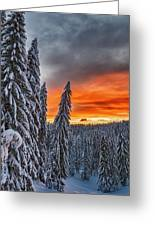 Snow And Sunrise Greeting Card