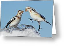 Snow Buntings And Ice Greeting Card