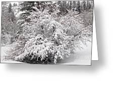 Snow Bush Greeting Card