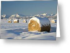 Snow-covered Hay Bales Okotoks Greeting Card by Michael Interisano