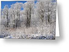 Snow Covered Maple Trees Iron Hill Greeting Card