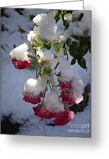 Snow Covered Roses Greeting Card