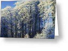 Snow Covered Trees In A Forest, County Greeting Card