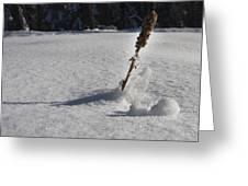 Snow Crystals Greeting Card