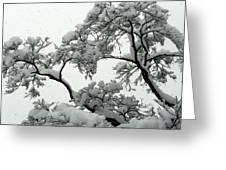 Snow Falling On Branches Greeting Card