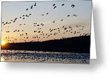 Snow Geese At Sunrise Greeting Card