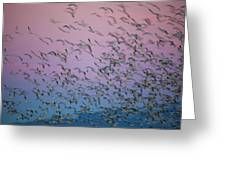Snow Geese Painting Greeting Card