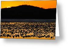 Snow Geese Sunrise Greeting Card