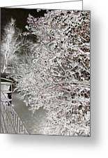 Snow Laden Branches II Greeting Card
