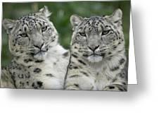 Snow Leopard Pair Sitting Greeting Card