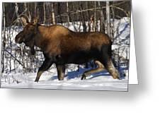 Snow Moose Greeting Card