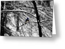 Snow On Beak Greeting Card