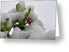 Snow On The Flowers Greeting Card