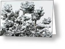 Snow On The Pines Greeting Card