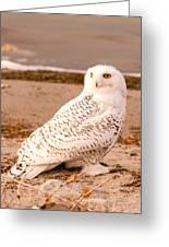 Snow Owl3 Greeting Card