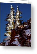Snow Tipped Trees  Greeting Card