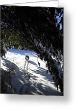 Snow Trail-under The Boughs Greeting Card