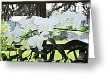 Snow White Orchid On The Water Accented Fx  Greeting Card