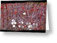 Snowberries And Rosehips Greeting Card