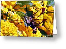 Snowberry Clearwing Hummingbird Moth Greeting Card