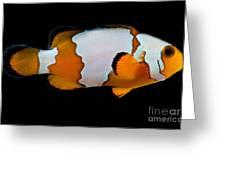 Snowflake Clownfish Greeting Card