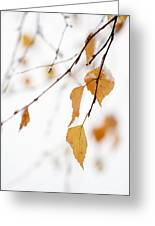 Snowing In Autumn Greeting Card