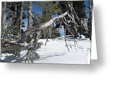 Snowshoeing On A Clear Day Greeting Card