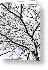 Snowy Branch Greeting Card